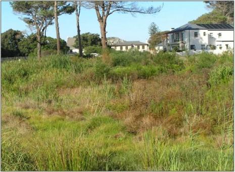 Re-emergence of wetland vegetation